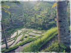 РС 163 Древняя Индонезия
