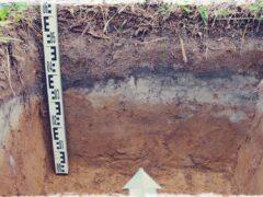 РС 234 Почвоведение в археологии
